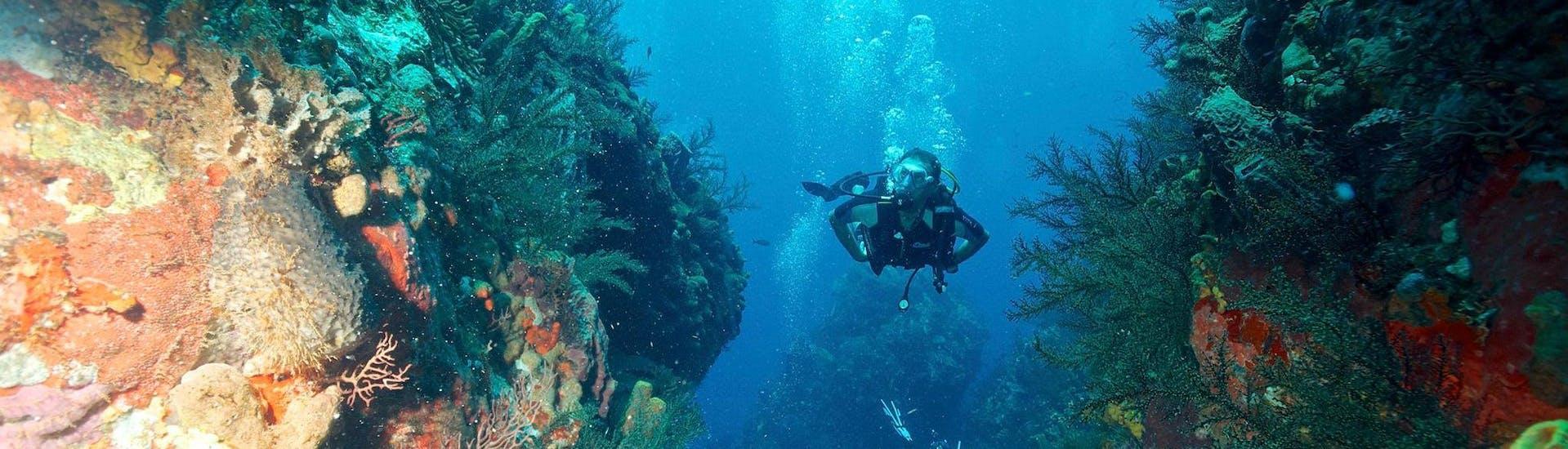 Scuba Diving Course - PE12 & SSI Scuba Diver