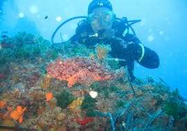 Scuba Diving Course for Beginners - BSAC Ocean Diver