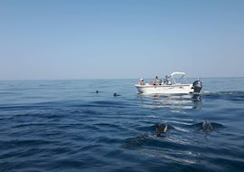 Dolphin Watching - Faro