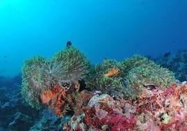 Snorkeling - Berlengas
