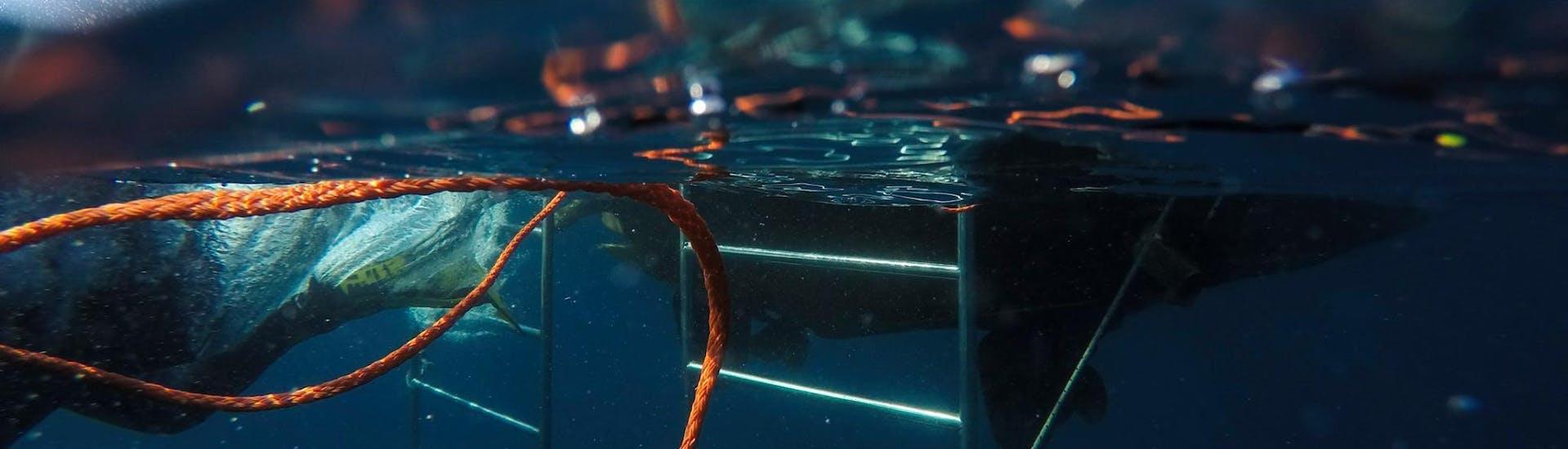 PADI Discover Scuba Diving in Premantura for Beginners