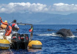 Azoren Walbeobachtung & Insel Bootstour mit Azores Whale Watching TERRA AZUL