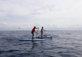Private Paddle Surfing Lessons for Kids & Adults - Beginners