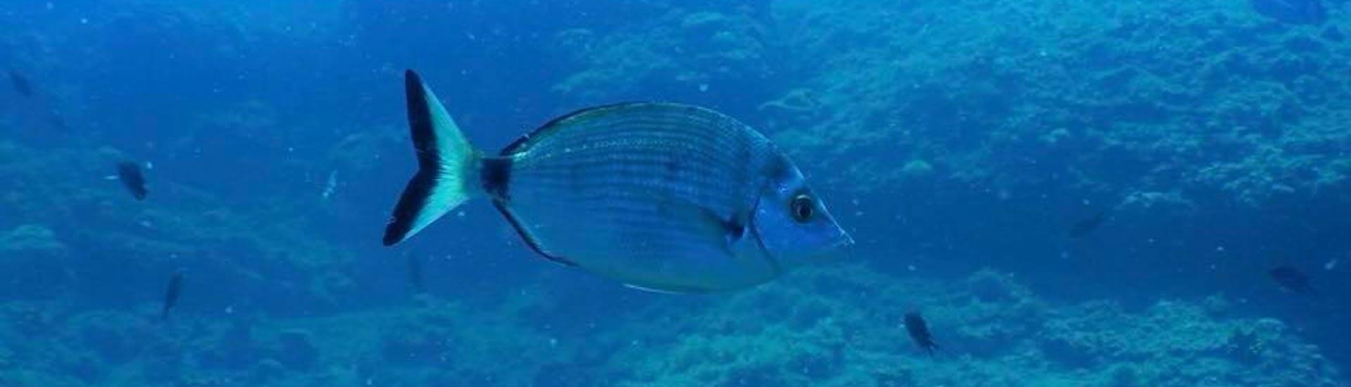 Trial Scuba Diving for Beginners - Veštar Bay