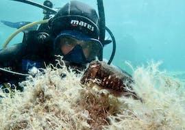 Schnuppertauchen in Poltu Quatu für Anfänger mit Orso Diving Club Poltu Quatu