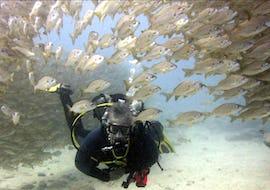 Scuba Diving - Dives in Tenerife