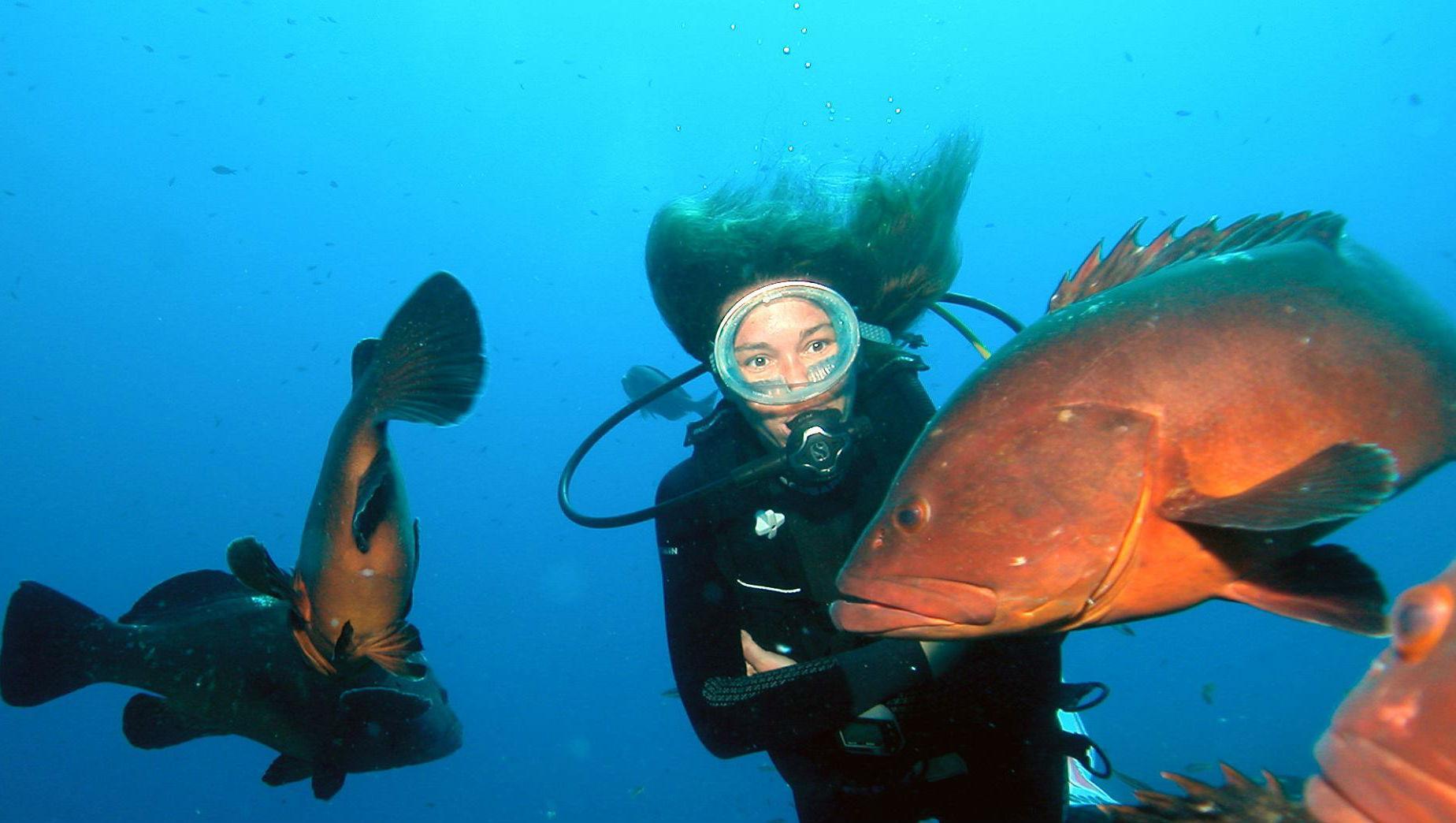 Immersioni Subacquee Guidate - Arcipelago La Maddalena di Orso Diving Club  Poltu Quatu