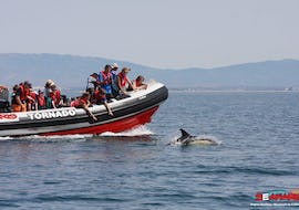 Boat Tour with Dolphin Watching in Portimão