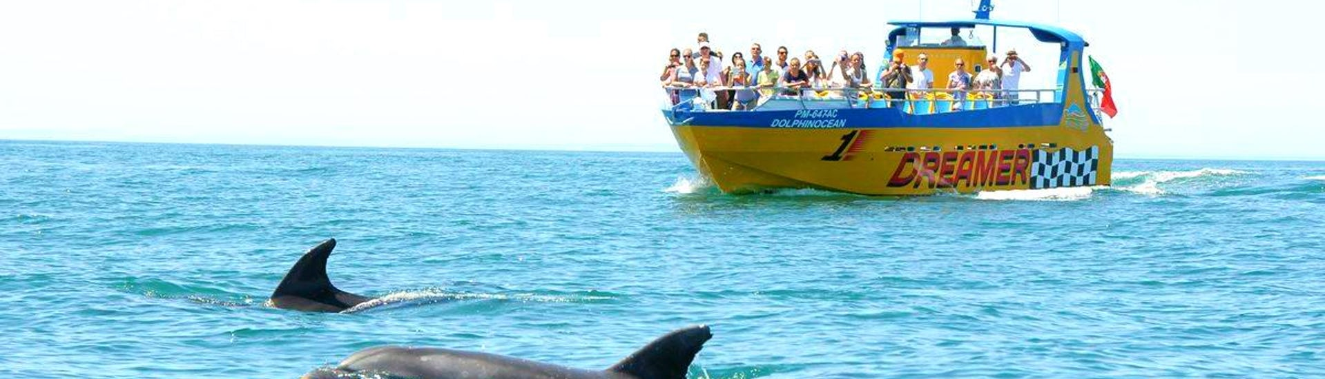 """A group of vacationers enjoys the fascinating view of the dolphins jumping alongside their boat on their Boat Tour """"Caves & Dolphins on the Dreamer"""" off the beautiful coast of Albufeira together with the team from Dream Waves."""
