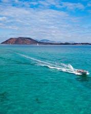Boat tours Fuerteventura Shutterstock