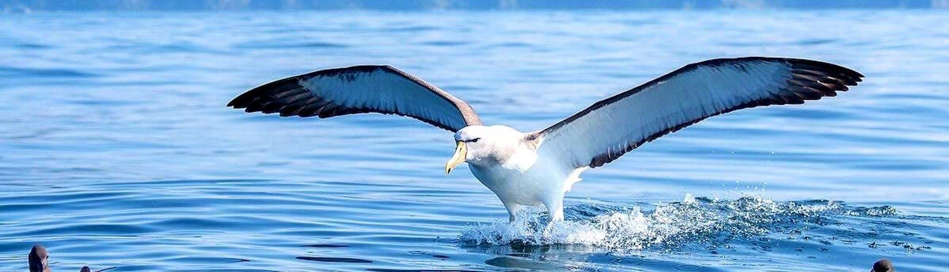 boat-trip-in-kaikoura-albatross-watching-albatross-encounter-kaikoura-hero