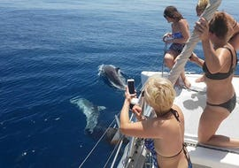 "Private Catamaran Tour ""Dolphin Sighting"" (18P) - Estepona"