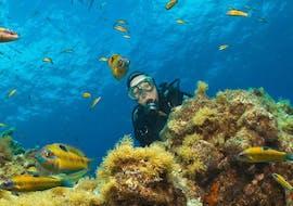 Discover Scuba Diving in Santa Maria