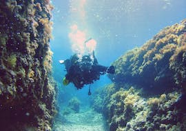 Scuba Diving - Guided Reef & Bay Dives in Torrenova