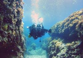 Scuba Diving - Guided Reef & Bay Dives in Torrenova