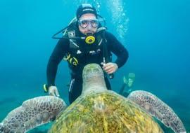 Discover Scuba Diving in Tenerife