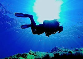 Discover Scuba Diving in Ustica for Beginners