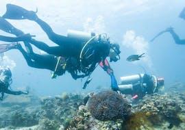 Discover Scuba Diving in Novalja with Foka Diving Centar Novalja