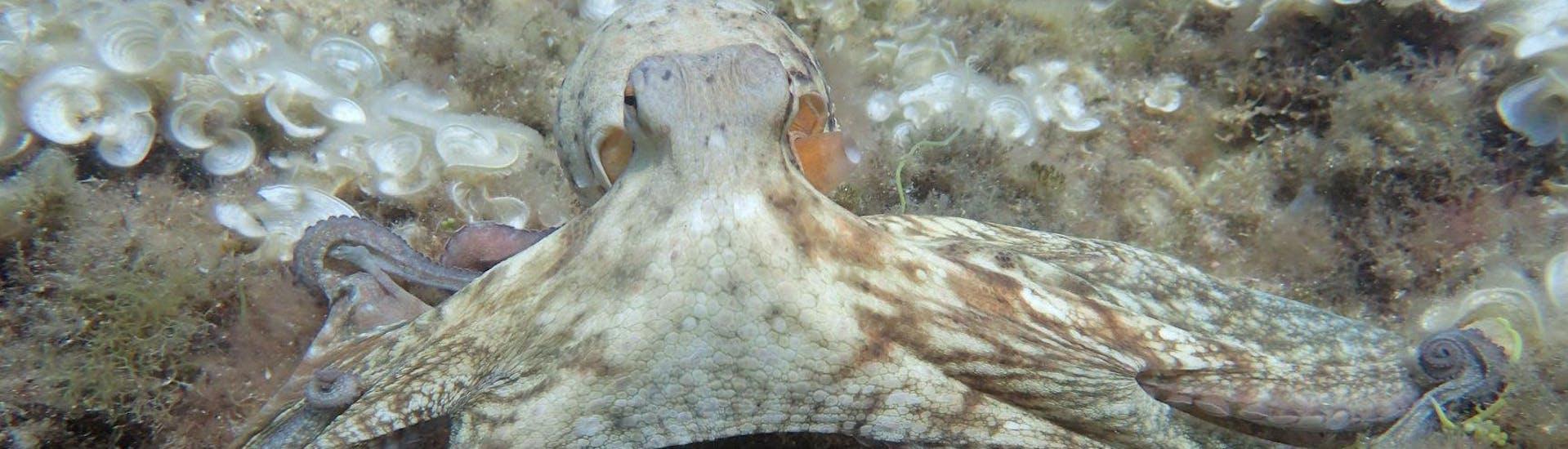 Buceo - Inmersión Guiada en Barco de Noche en Benidorm