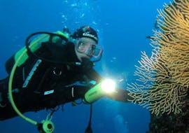 Scuba Diving - Guided Boat Dives in Šolta