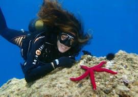 Trial Scuba Diving for Beginners - Kaštel Stari