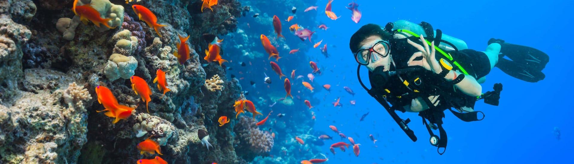 Diving (c) Shutterstock