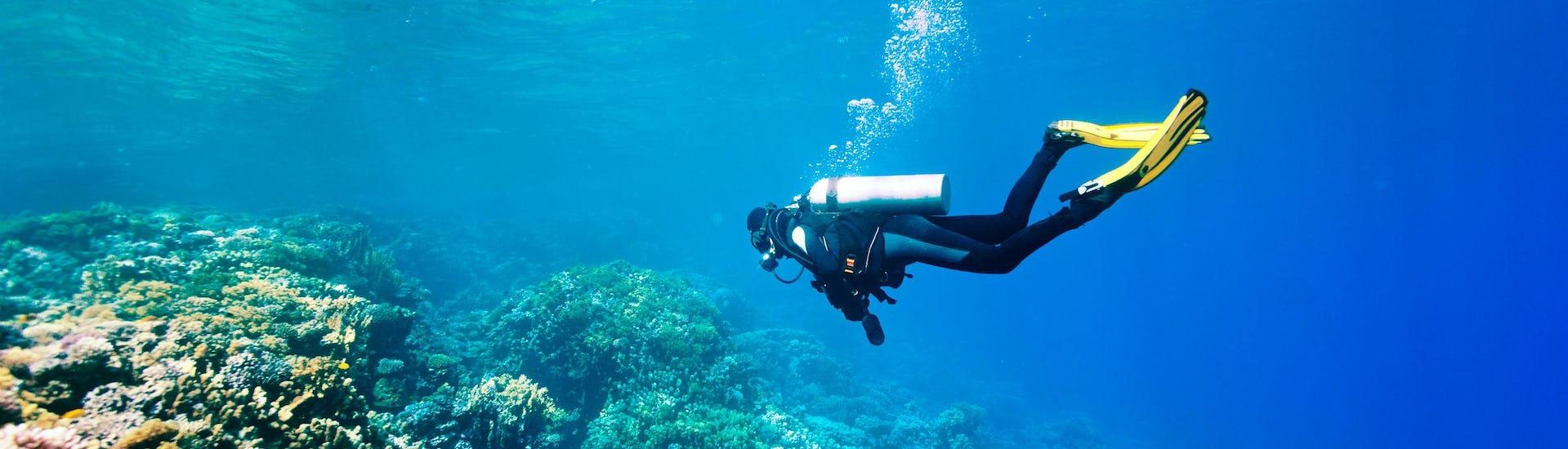 Snorkeling - Baie de Calvi