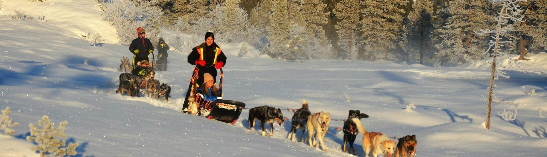The participants of the Dog Sledding near Trondheim in Kopperå - 2 Day Tour with Norway Husky Adventure are having fun while mushing their team of sled dogs through the glistening snow.