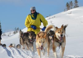 A girl having fun during Dog Sledding near Trondheim in Kopperå - Half Day Tour with Norway Husky Adventure.