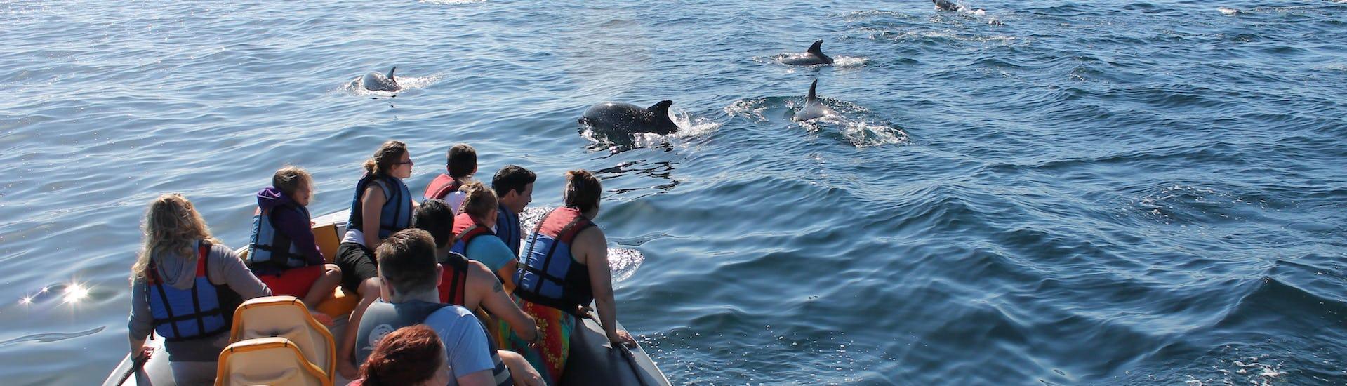 "Boat Tour ""Dolphin Watching"" - Praia Da Luz"