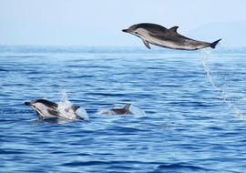 """Boat Tour from Ponta Delgada - """"Swimming with Dolphins"""""""
