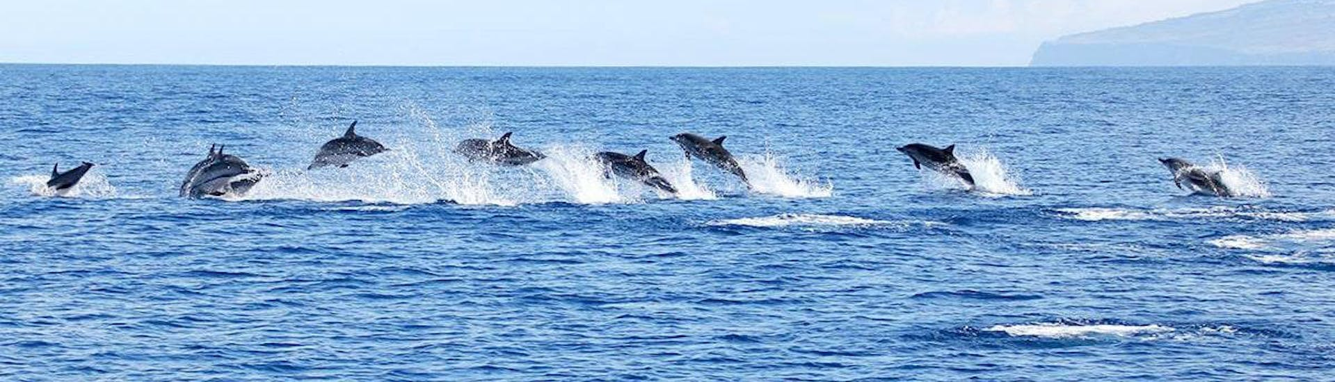 "Boat Tour from Ponta Delgada - ""Whale & Dolphin Watching"""