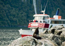 A group of people is watching a seal from one of the Southern Discovery ships during their Encounter Nature Cruise in Milford Sound - Winter.