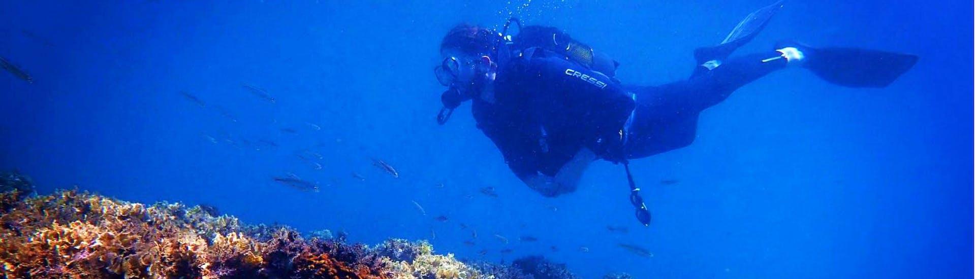 Ein Taucher, der in einer Tauchstunde mit den erfahrenen Tauchlehrern des Evelin Dive Center die Tiefen der kretischen See erkundet.