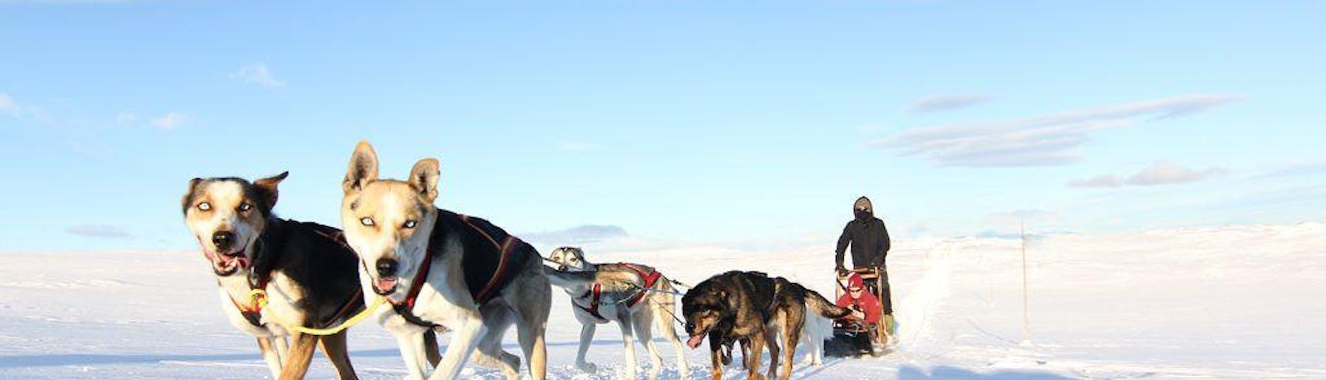 husky-sledding-in-geilo---5-km-hero