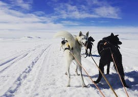 The view from the sledge over the dogs during Husky Sledding in Geilo - 10 km organized by Geilo Husky.