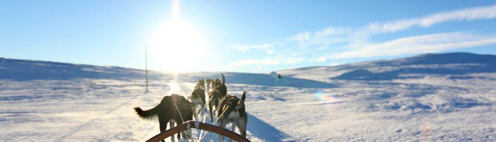 The view from the sledge over the dogs during Husky Sledding in Geilo - 10 km organized by Geilo Husky