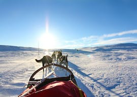 Sunny tour with friendly dogs from Geilo Husky during Husky Sledding in Geilo - 5 km.