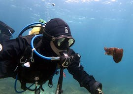Guided Boat Dives in Comino for Certified Divers