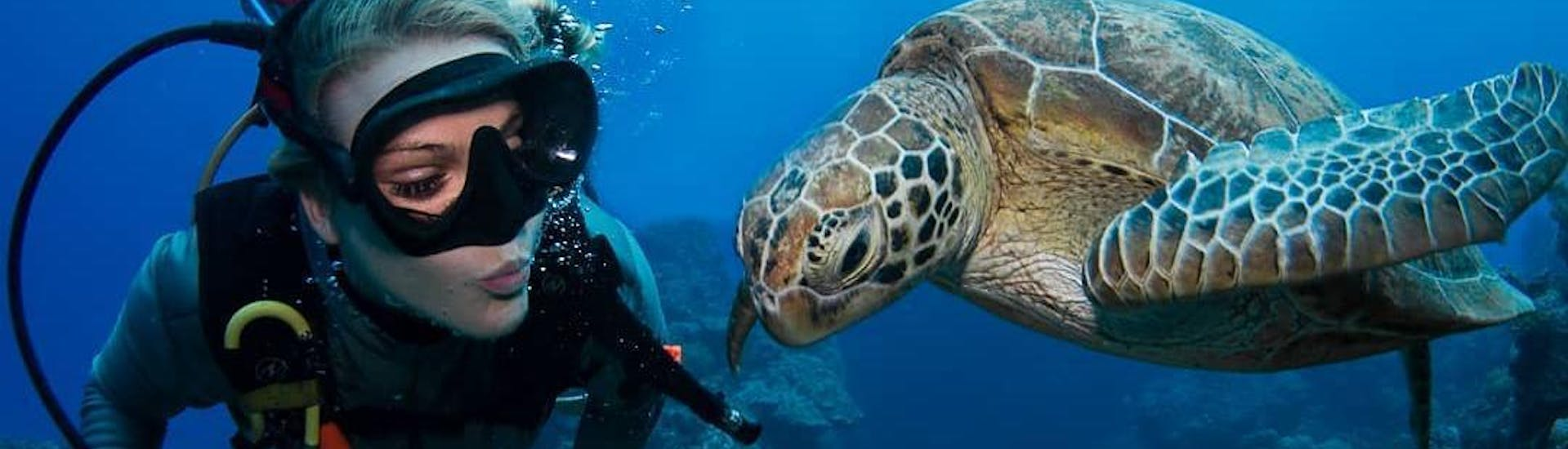A woman is admiring a curious turtle during the Guided Dives on the Great Barrier Reef for Certified Divers organised by Passions of Paradise.