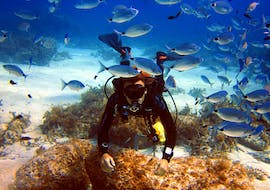 Guided Reef & Bay Dives in Malta for Certified Divers