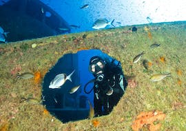 Guided Shore Dives in Malta for Certified Divers