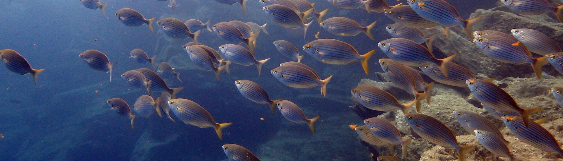 Buceo de Prueba para Principiantes - Tenerife
