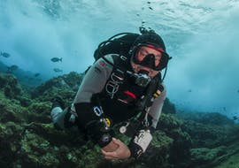 Discover Scuba Diving in Faial