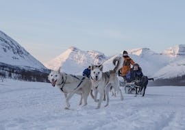 Huskies pull a sledge and look cheerfully into the camera during dog sledding near tromso with Lyngsfjord adventure.