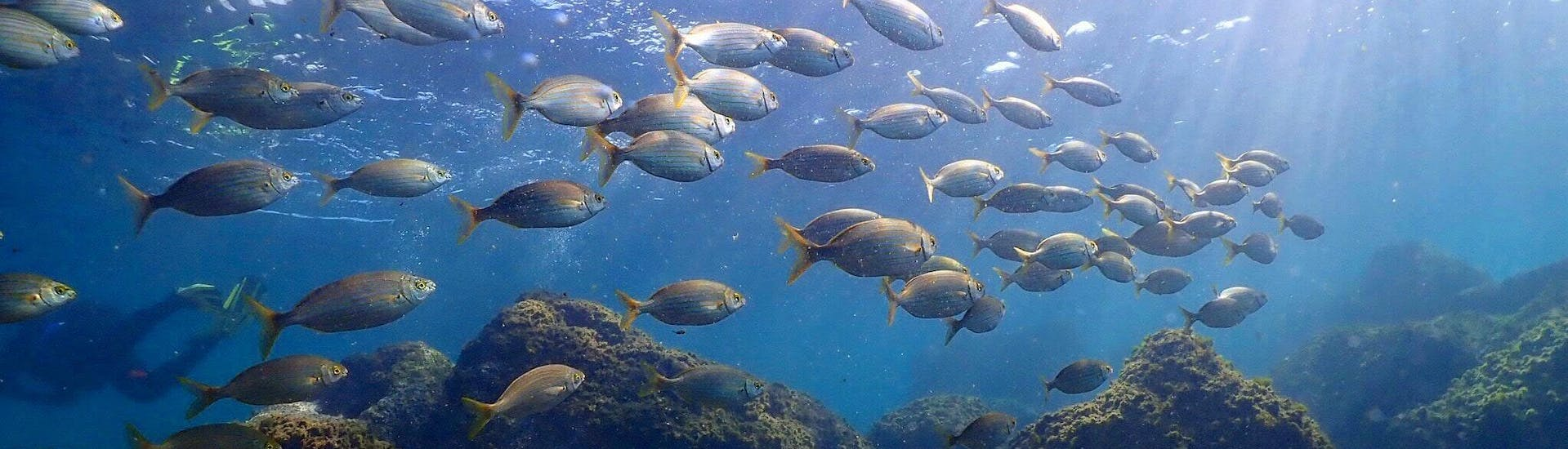 Scuba Diving - Guided Dives in Barcelona