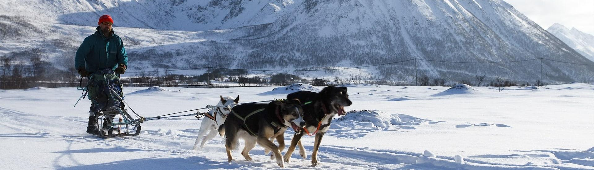 Three powerful huskies pull a sled in the snow-covered landscape during the dog sledge ride in Risøyhamn with Huskyfarm Andoy.