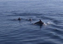 Giro in barca a Capo Figari con avvistamento delfini