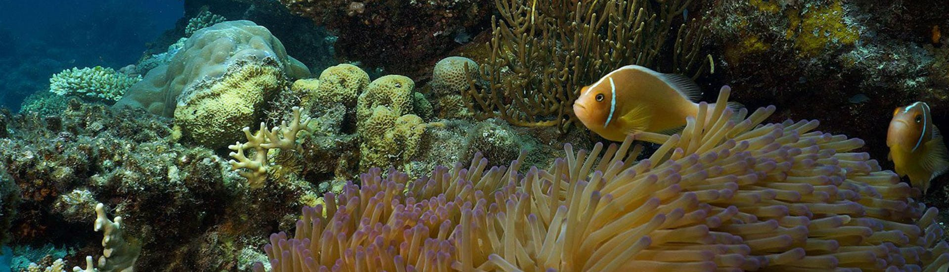An image of colourful fish swimming around the coral reef that can be seen during the offer Introductory Scuba Diving at the Great Barrier Reef with Ocean Freedom.
