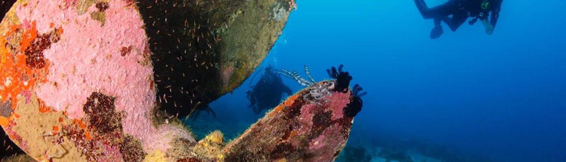 Wreck Diving in Kvarner Bay for Certified Divers